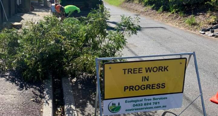 What it takes to be a qualified Arborist